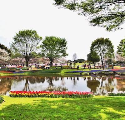 hdrtist, 昭和記念公園