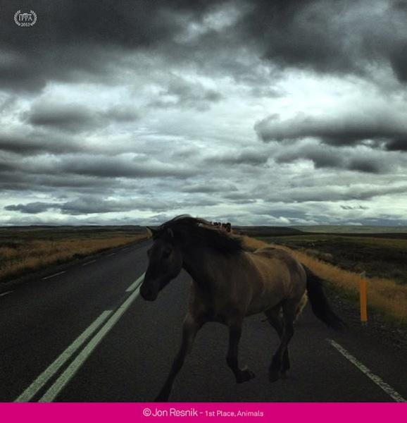 2013 iPhone Photography Awards Jon Resnik