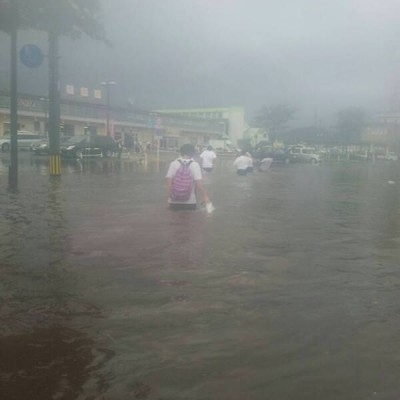akita-rain.jpg