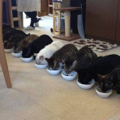cat-bowl-eating.jpg