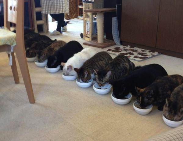 猫カフェの食事風景