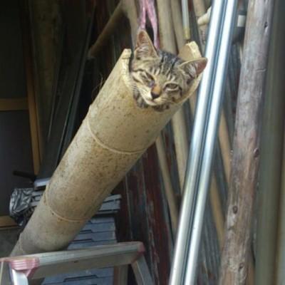 nagashi-cat-top.jpg