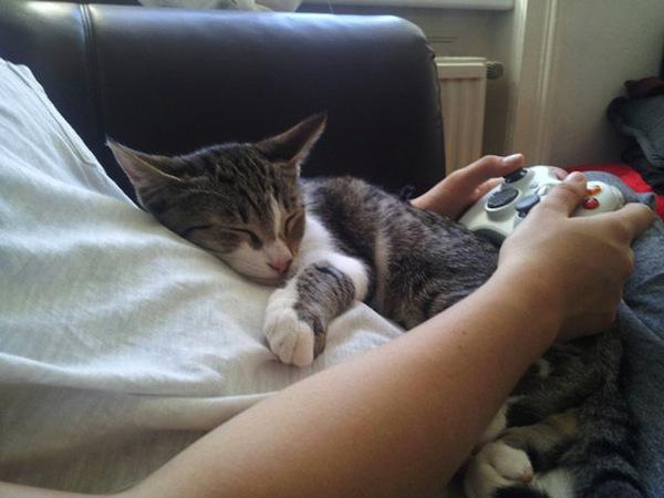 猫が可愛くて可愛くてたまらない
