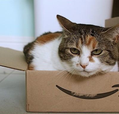 amazon-cat.jpg