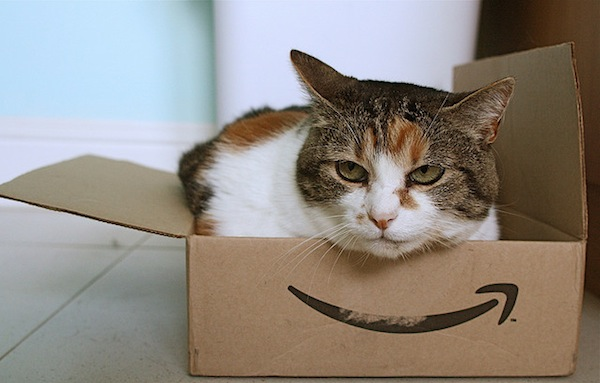 Amazon cat