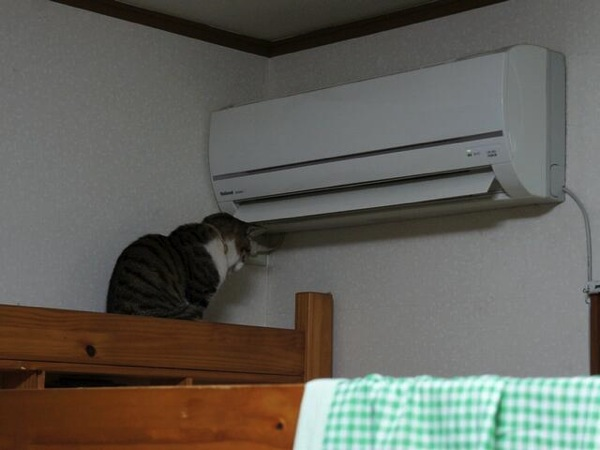 Cat warming up