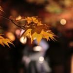 koyo-light-up-8.jpg