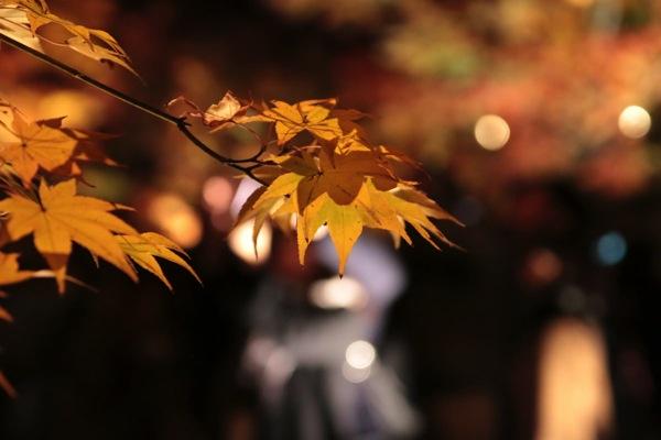 瑞巌寺で見た紅葉のライトアップ