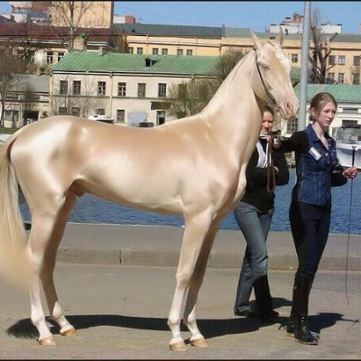worlds-most-beautiful-horse.jpg