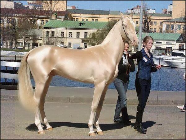 世界一美しい馬