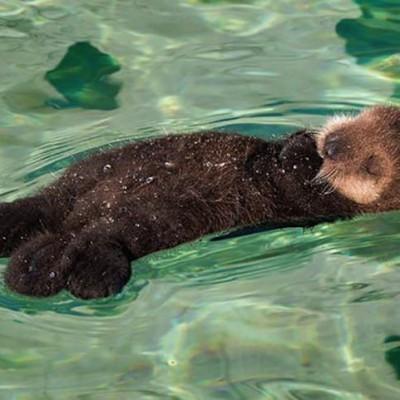 cute-baby-otter-1.jpg