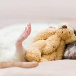 cute-rat-1.png