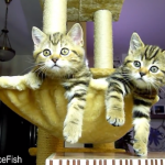 funny-cats-watching-tennis-2.png