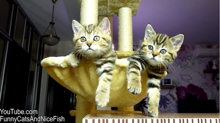 Funny cats watching tennis
