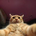 Cat-Selfies-1.jpg