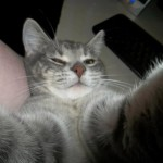 Cat-Selfies-10.jpg