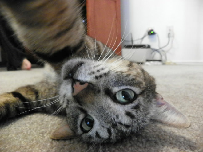 Cat-Selfies-11.jpg