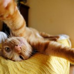 Cat-Selfies-12.jpg