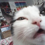 Cat-Selfies-13.jpg