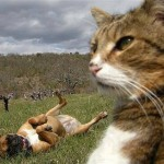 Cat-Selfies-14.jpg