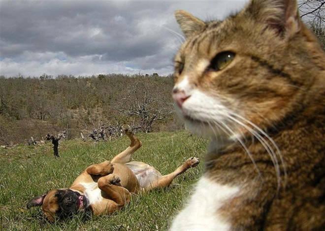 Cat Selfies(自分撮りする猫)