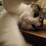 Cat-Selfies-16.jpg