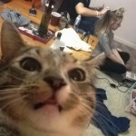 Cat-Selfies-18.jpg
