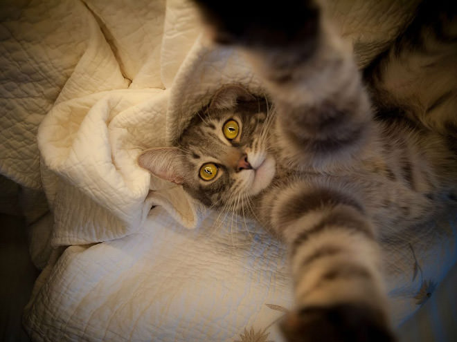 Cat-Selfies-5.jpg