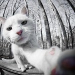Cat-Selfies-8.jpg