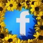 facebook-sunflower.jpg