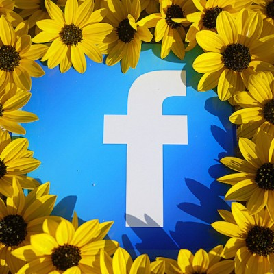 facebook-sunflower.jpg
