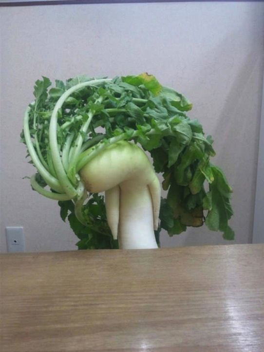 funny-vegetables-5.jpg