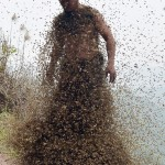 She-Ping-Bees-Swarm.jpg
