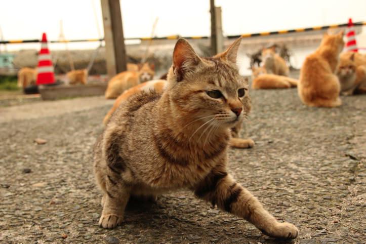 青島(通称「猫島」)