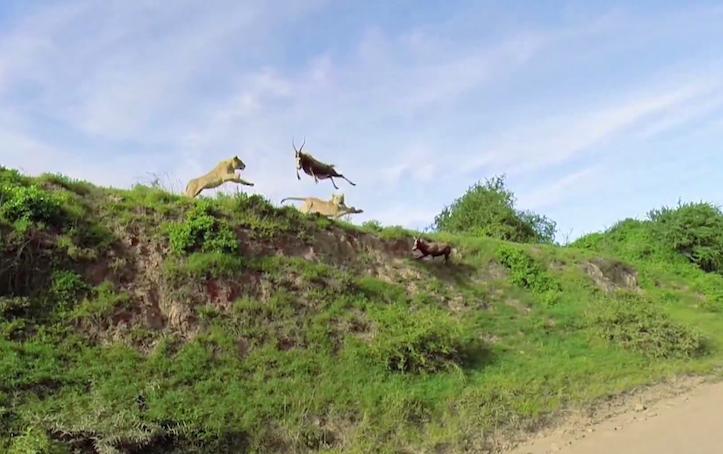 Amazing catch in mid air