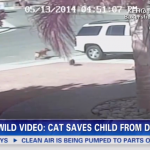 cat-saves-boy-from-dog.png