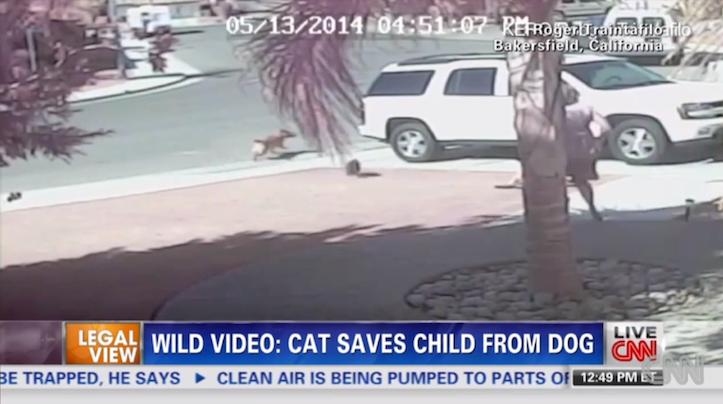 Cat saves boy from dog