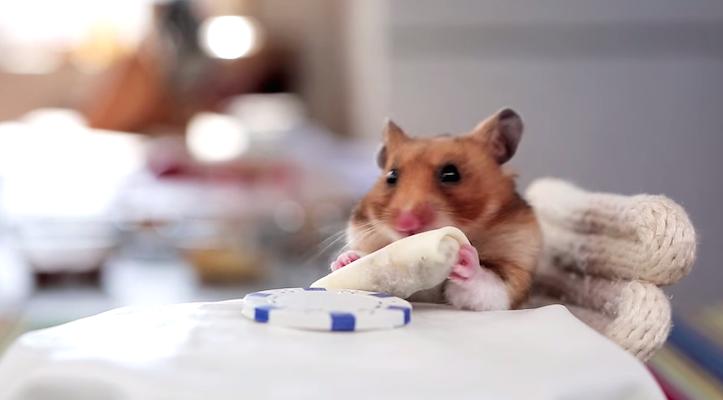 ブリトーを食べるハムスター