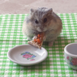 hamster-eating-pizza.png