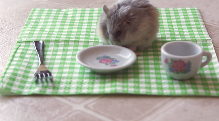 Hamster eating pizza