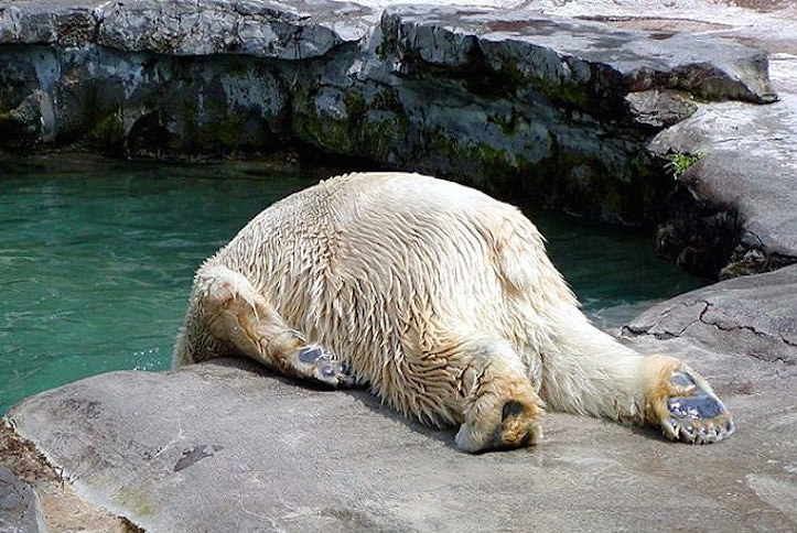 https://gori.me/wp-content/uploads/2014/05/hungover-animals-1.jpg