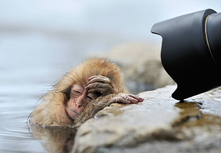 hungover-animals-12.jpg