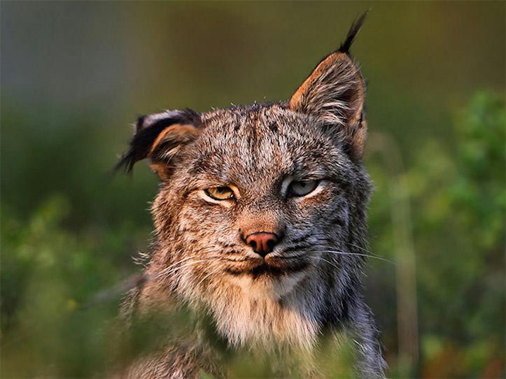 hungover-animals-2.jpg