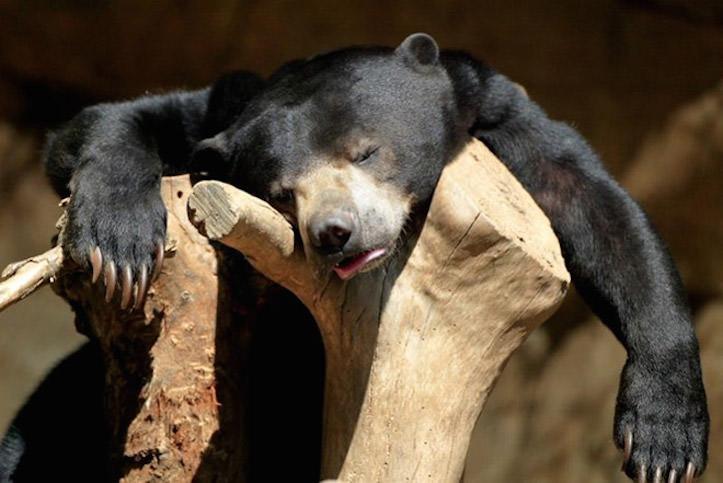 hungover-animals-3.jpg
