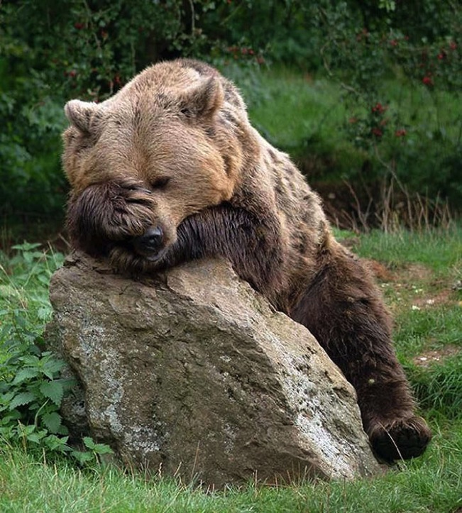 hungover-animals-5.jpg