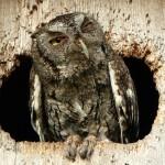 hungover-animals-8.jpg