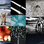 ippawards-2014.png