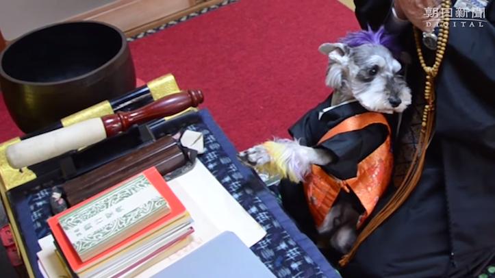読経に合わせて合掌する犬が可愛らしいと話題に!