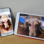 iphone-6-plus-ipad-mini-1.jpg