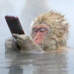 天然温泉に浸かりながらiPhoneを使うニホンザルの写真が話題に